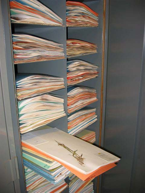 Herbarium Cabinet with Sheets